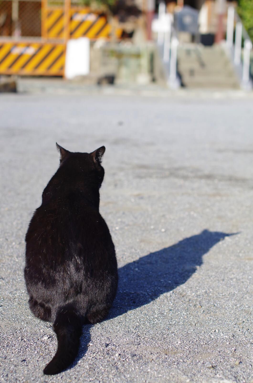 catMay 28 201617