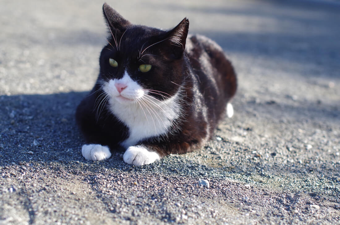 catMay 28 201618