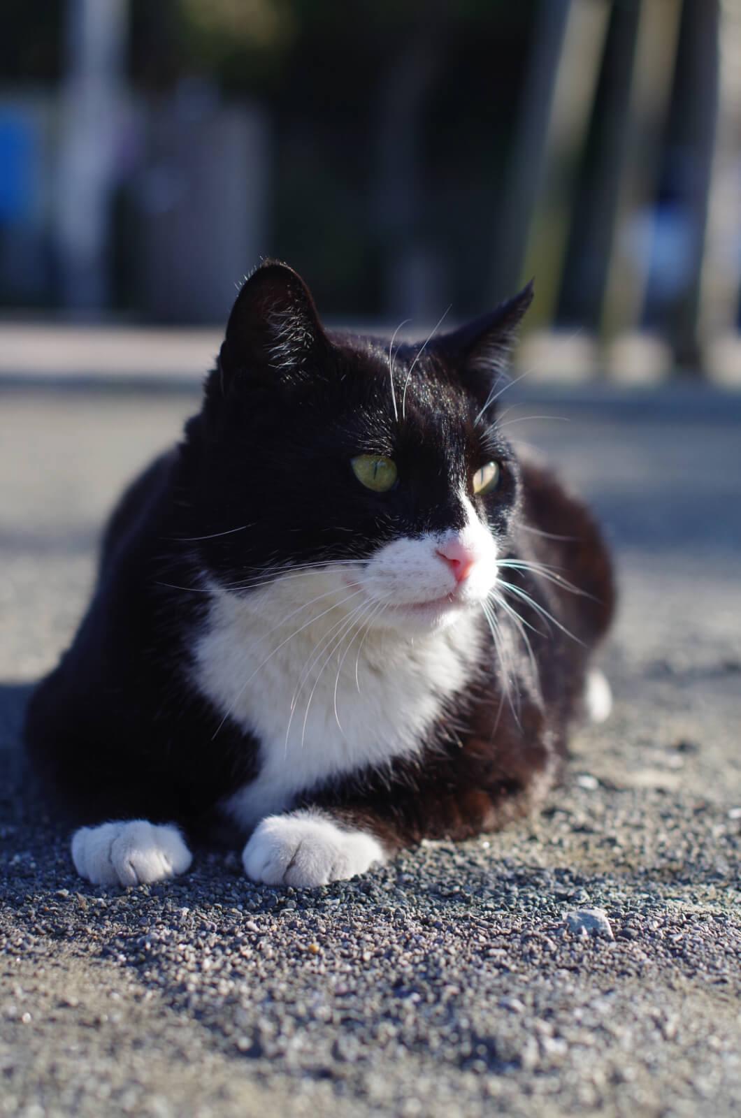 catMay 28 201620