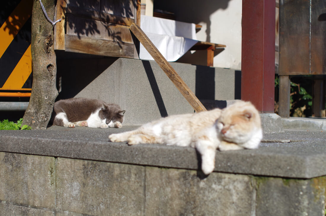 catMay 28 201621