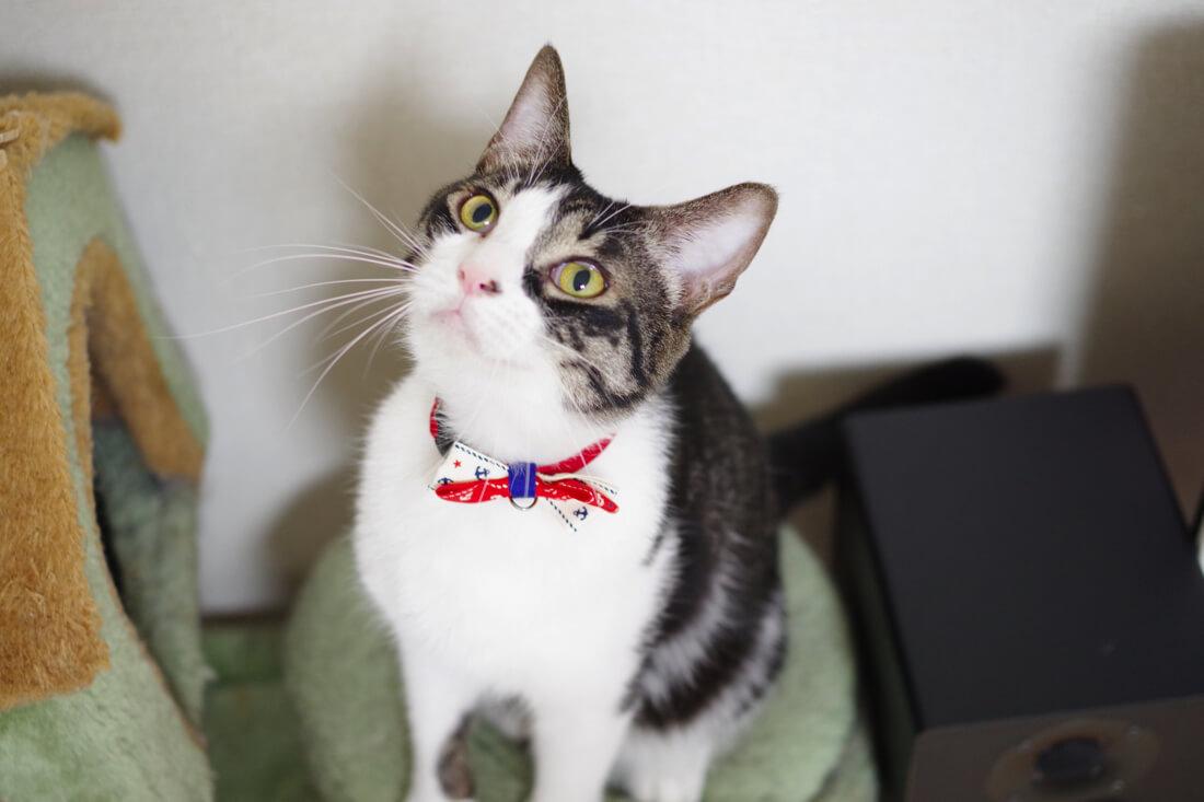 catMay 28 201633