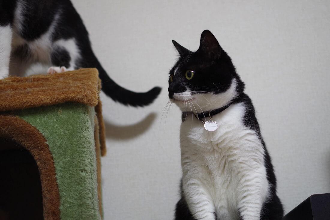 catMay 28 201640