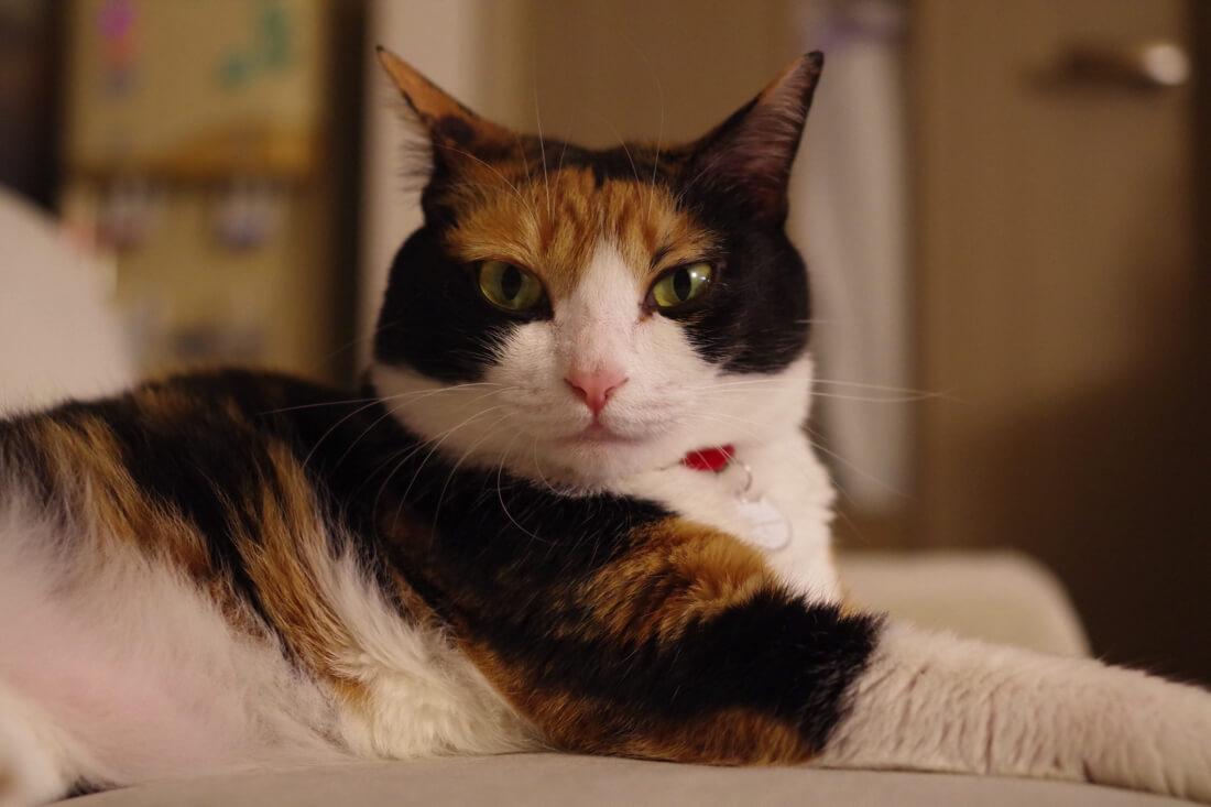 catMay 28 201643