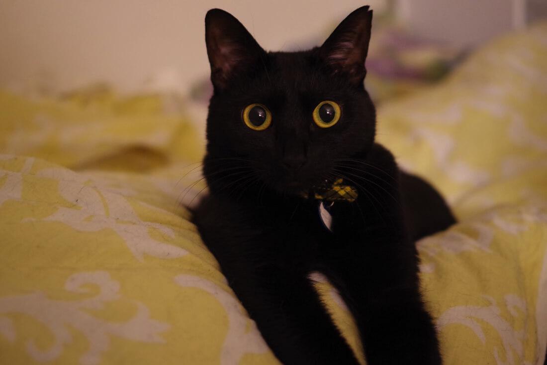 catMay 28 201644