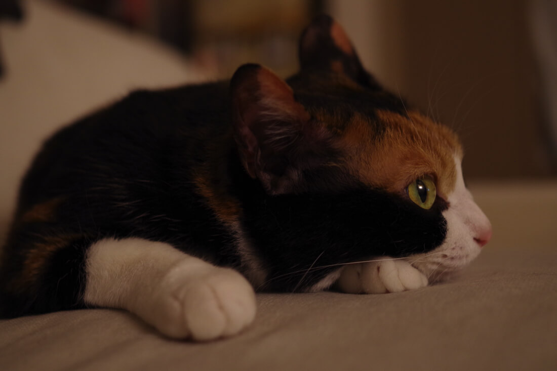 catMay 28 201647