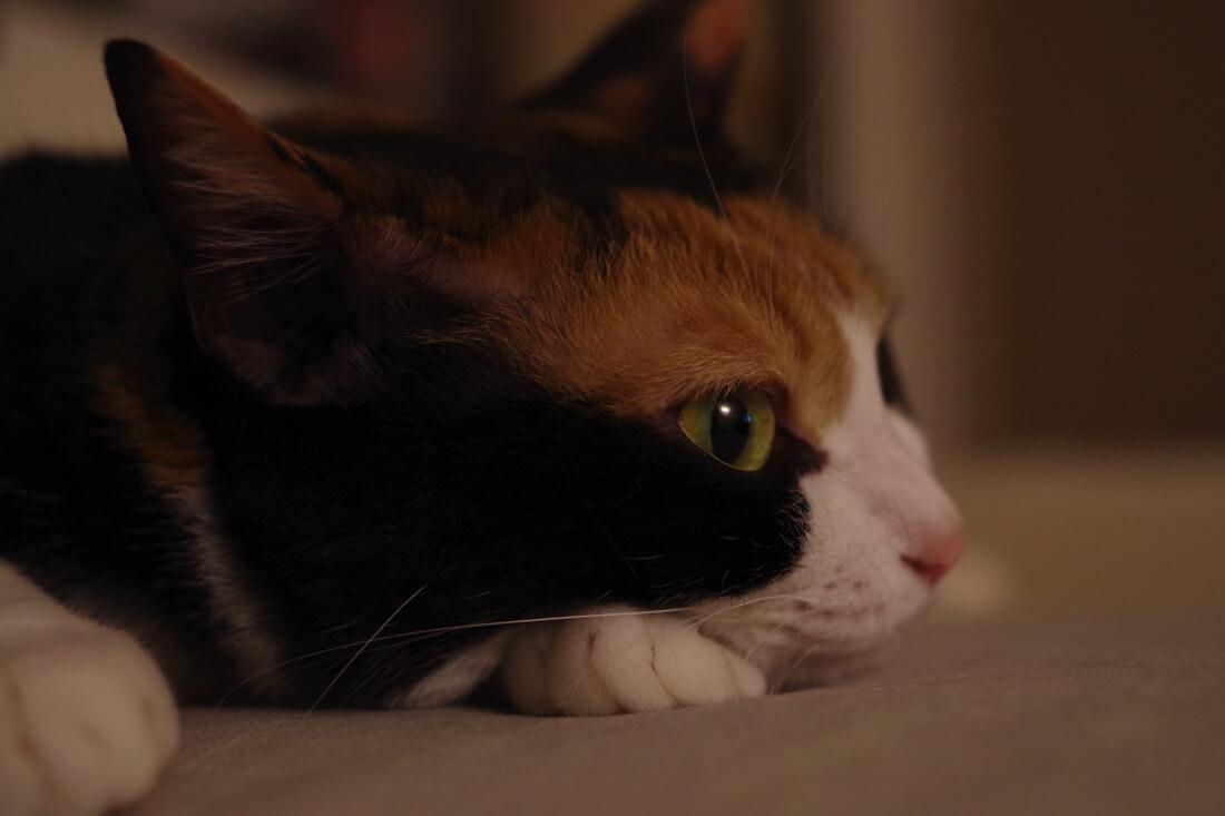 catMay 28 201648
