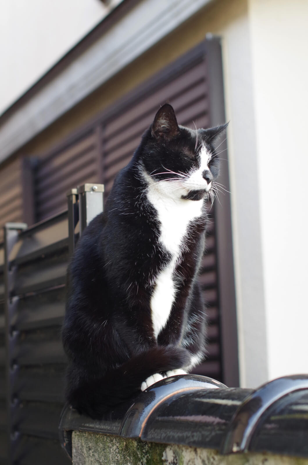 catMay 28 201658