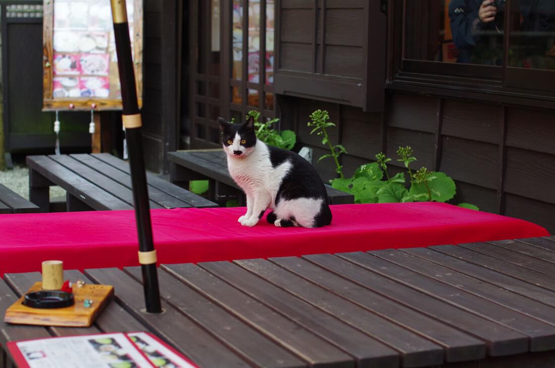 catMay 28 201661