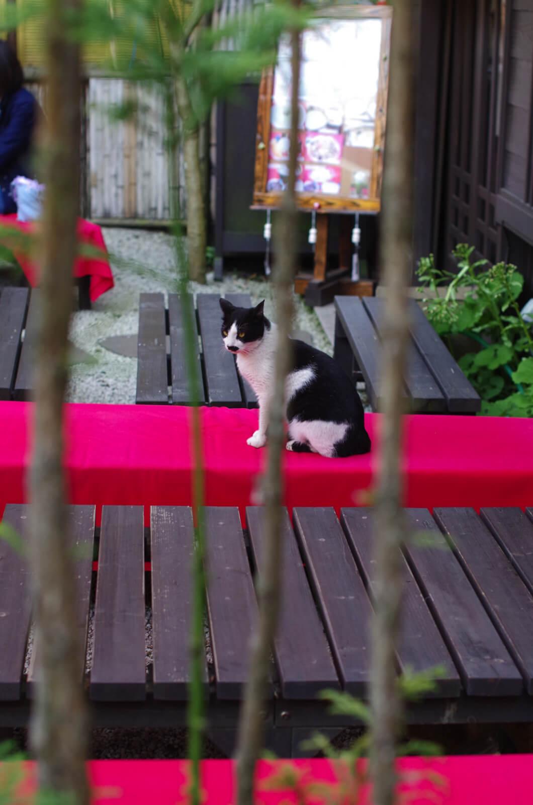 catMay 28 201663