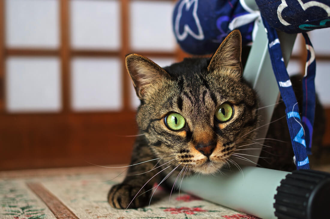 catMay 28 201676