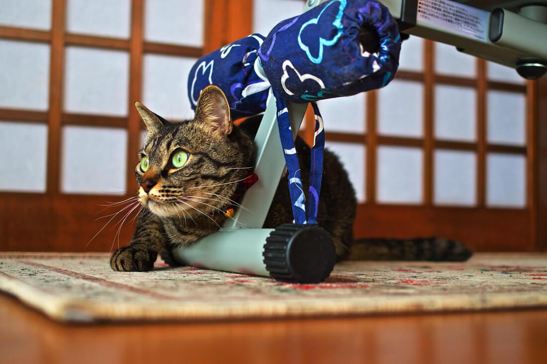 catMay 28 201677